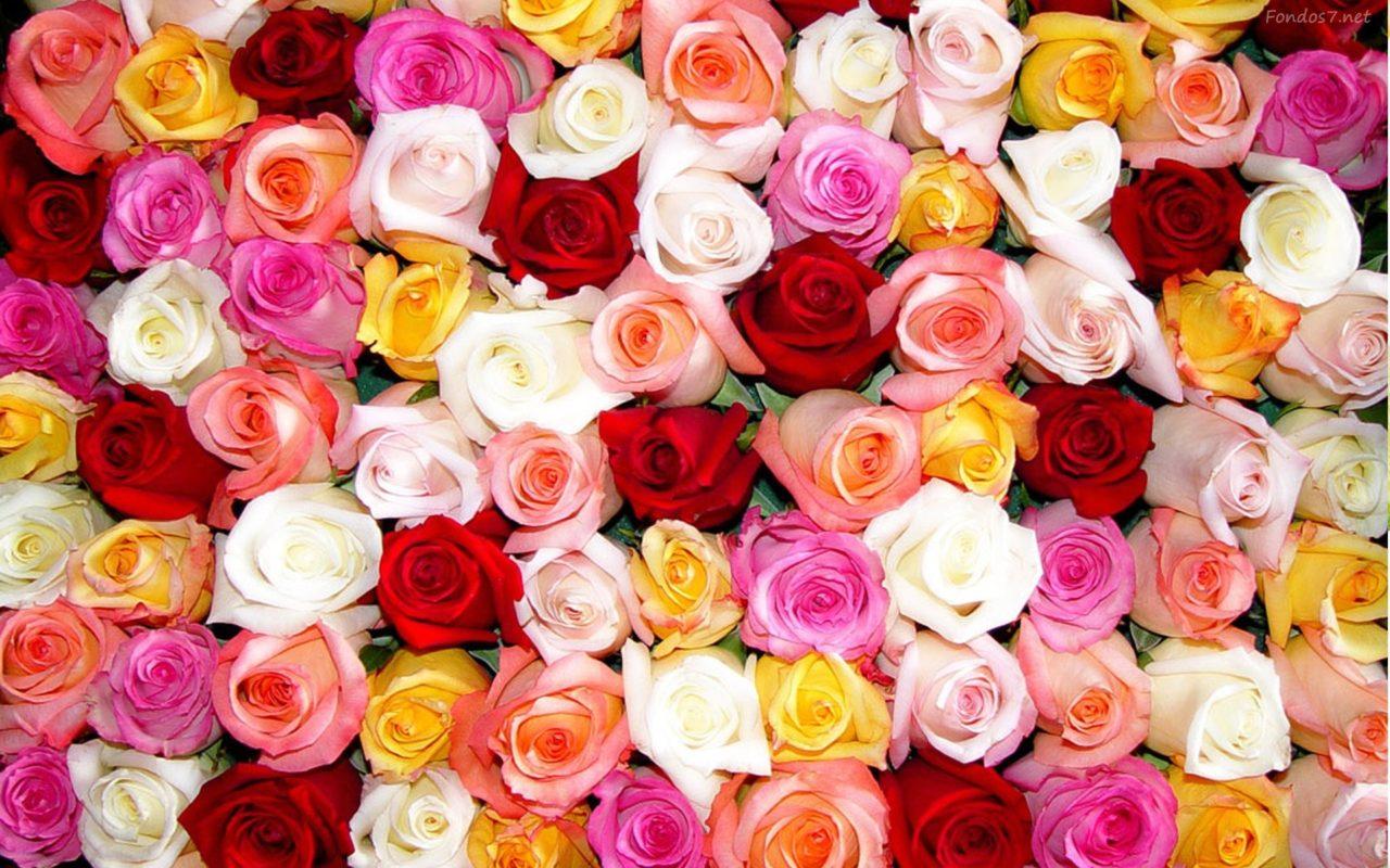 Significado De Las Rosas Según Su Color Floristería En Valencia